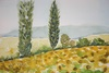 Provence fields with pine trees